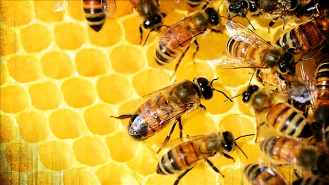 Vandals Destroy Iowa Beehives, Killing 500000 Bees