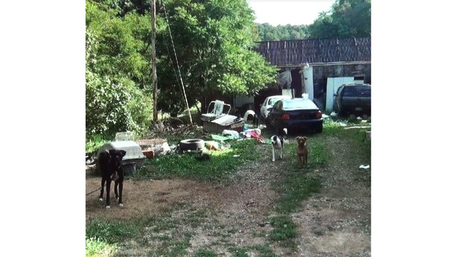 37 rescued dogs recovering in Wetzel County